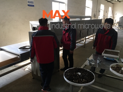 Edible Insects Microwave Drying and Sterilization Machine